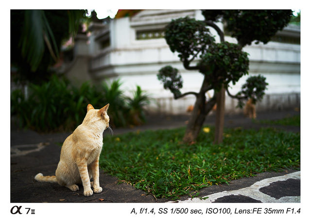 Sony Distagon T FE 35mm f1.4 ZA Lens Sample Images