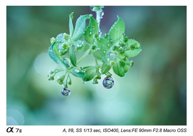 Sony FE 90 mm f2.8 Macro G OSS Lens Sample Images