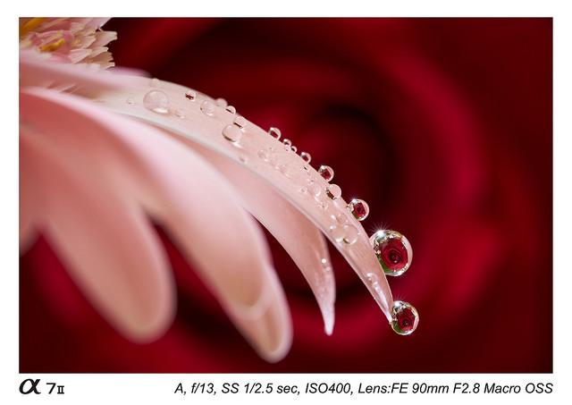 Sony FE 90 mm f2.8 Macro G OSS Lens Sample Images2