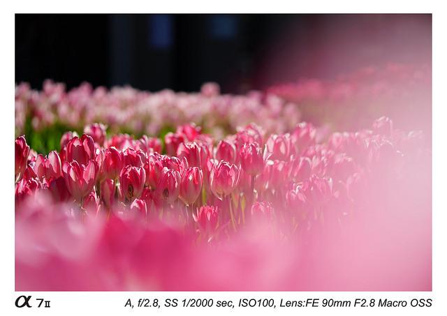 Sony FE 90 mm f2.8 Macro G OSS Lens Sample Images3