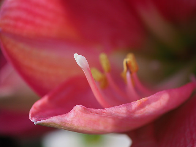 Panasonic LUMIX G Macro 30mm f2.8 Lens Sample Images7
