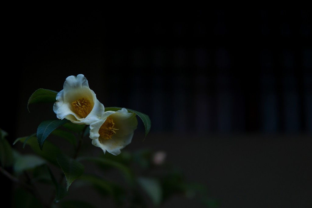 sigma-30mm-f-1.4-dc-dn-c-lens sample images