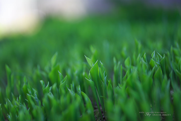 Tamron SP 85mm F1.8 lens review grass
