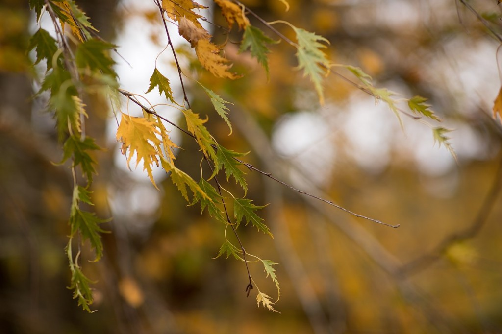 Canon EF 85mm F1.4L IS sample images2