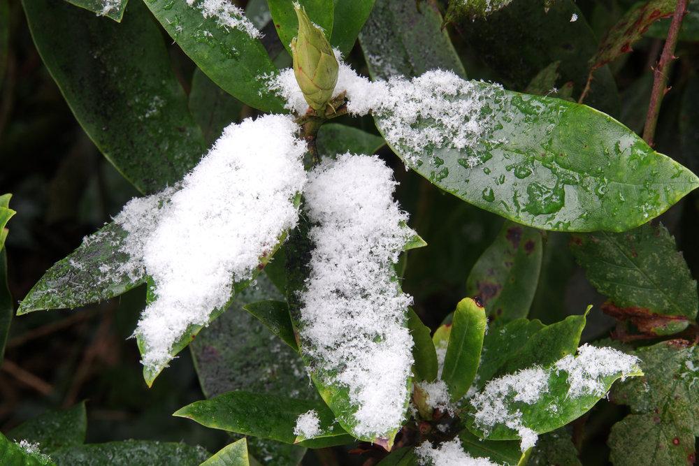 sony_e_18-135mm_f35-56_oss_snow_on_leaves