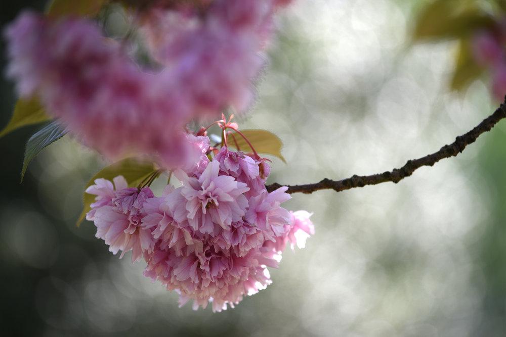 tamron_70-210mm_f4_blossom
