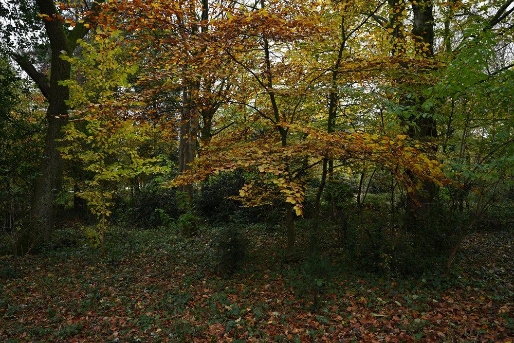 nikkor_z_24mm_f18S_astley_woodland